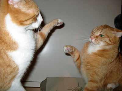 picby karamellzucar Sheila:yes its me now take off your pants