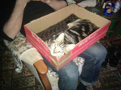 Holly Kitty In A Box