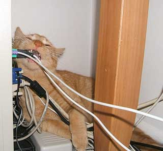 http://www.our-happy-cat.com/images/320xNxcat-eating-cable.jpg.pagespeed.ic.2JkNyVG016.jpg