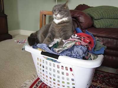 Cat Discipline How Do You Stop Your Cat S Bad Behavior