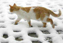 cat care even in winter is important picture from flickr.com