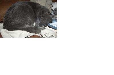 Oscar my cat