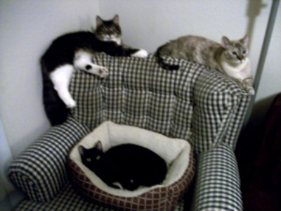 Rogue is the one in the bed, the other two are Peanut and Laszlo