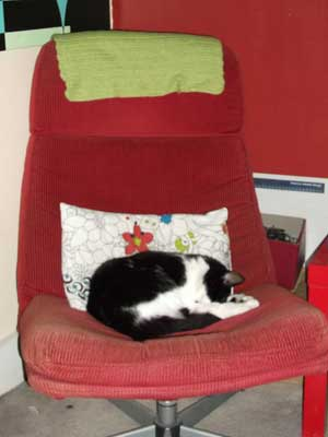 Byron our cat in his favourite chair