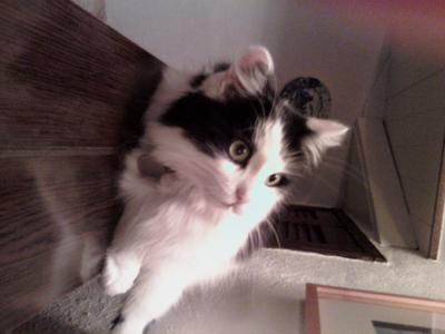 Alfie My Cat