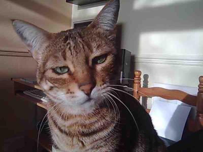 Cat S Eyes Excessive Watering