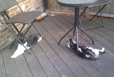 Our Garden Kitties