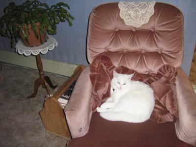 Meet our princess Casper
