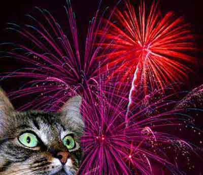 cats hate fireworks