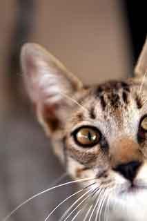 kitten caboodles