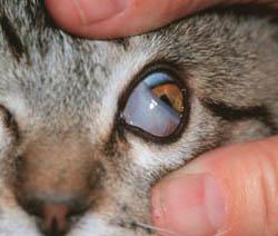 cat eye problem