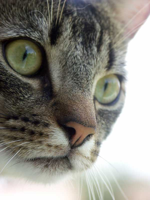 Cat Names Find The Purrrfect Name For Your New Pet