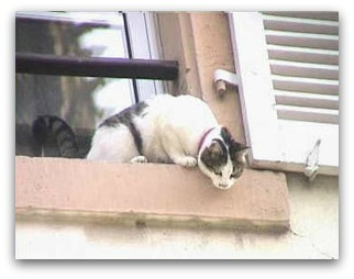 cat on window ledge
