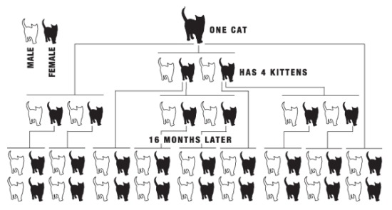 an introduction to the benefits of spaying your cat reducing the cat population Bibme free bibliography & citation maker - mla, apa, chicago, harvard.