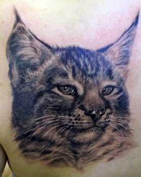 Hairless Cat Kitten Illnesses