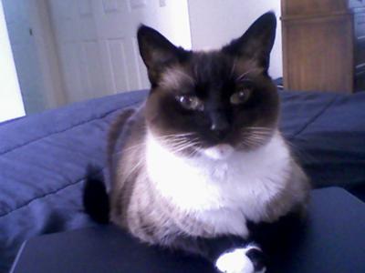 Sadie and her lap top