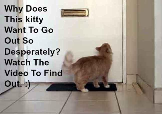 Happy Cat Newsletter