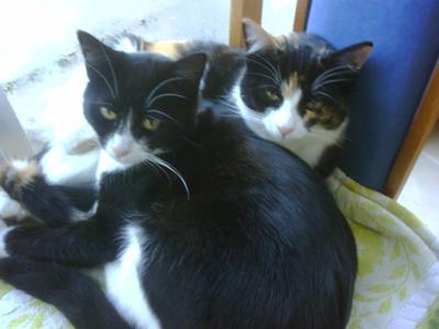 My 2 furbabys Eddie (B & W) and Missy (Torti - deceased)