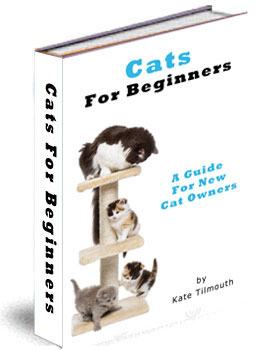 cats for beginners
