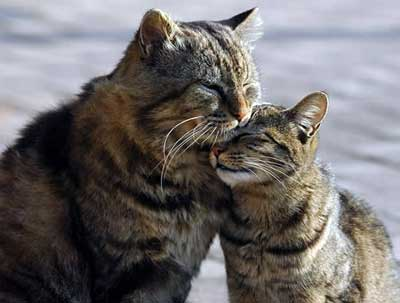 Cat Mating The Process And What To Expect