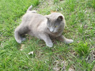 My cat Smokey before  cat behavior changes