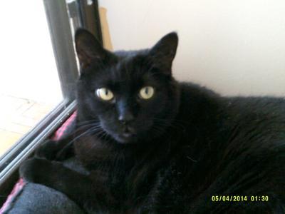 Cleo my cat