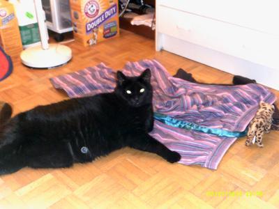 Cleo lazy around
