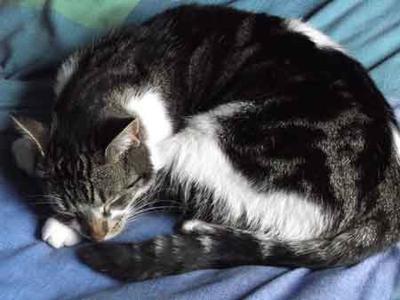 Shelley Asleep AGIAN
