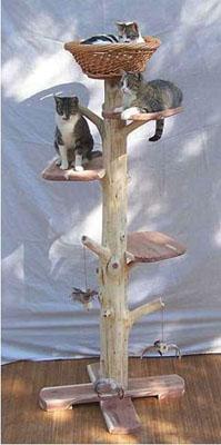 outdoor cat furniture plans
