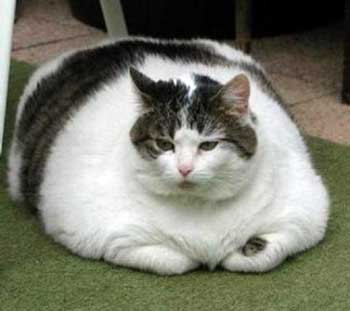 Best Cat Food For Lazy Cats