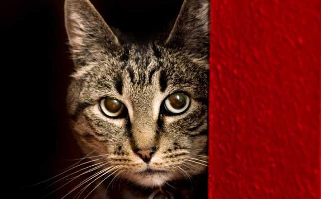 fearful cat