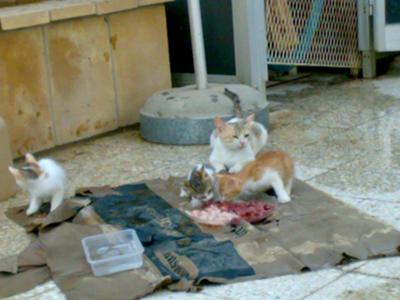 FERAL MOM WITH BABIES