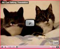 Image of: Animals Funny Cat Videos To Put Smile On Your Face Our Happy Cat Funny Cat Videos Cats Do The Funniest Things
