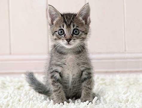 fip cat disease