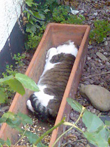Little Mo The Cat Sleeping In a plant Holder