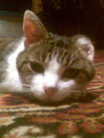 Little Mo our cat looking pretty