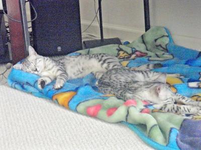 Tut and Osi sleeping