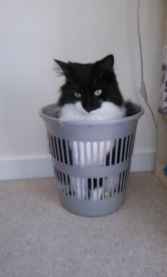 Humphrey jumped into a bin!