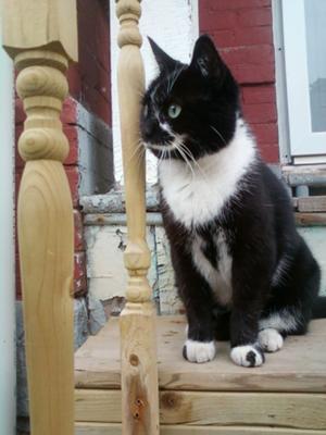 Moo my cat on my Porch