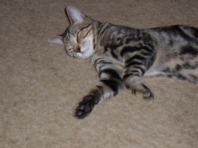 My Adult Cat Hisses At Kitten
