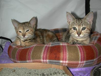 Jackie and Lilly as kittens in 2007
