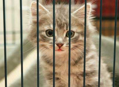 Consider An Animal Shelter For Cat Adoption And Cat Rescue