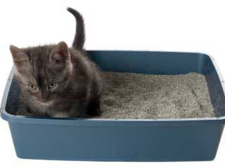 cat diarrhea causes and symptoms