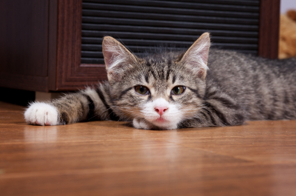 cat vomit treatments    feline friend