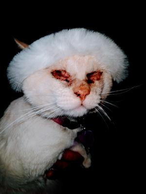 Blind cat called leibschen