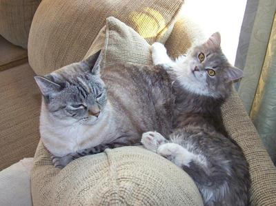 Gretchen and Grayson my cats