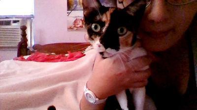 Little Mina the cat