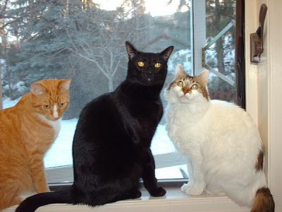 Simmba, Tigger and Nibbles