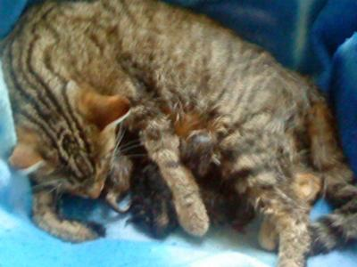 Mother Cat Attacks Her Kittens