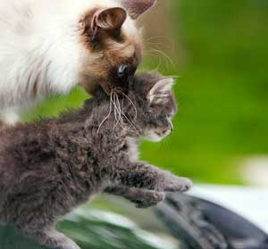 Why Do Mother Cats Bite Their Kittens